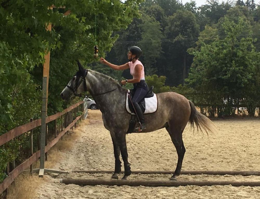 Working Equitation.